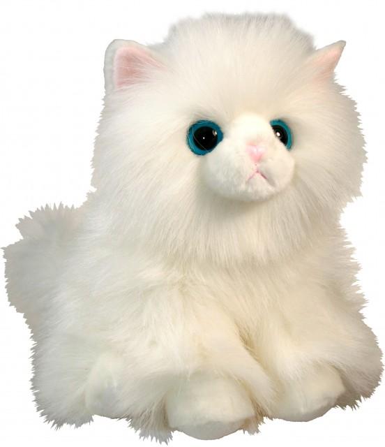 Angorská mačka